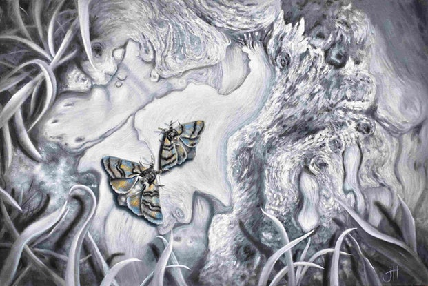 (CreativeWork) Gippsland Moths by Janette Hafez. Oil Paint. Shop online at Bluethumb.