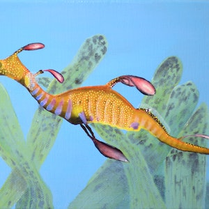 (CreativeWork) Weedy Seadragon by Jessica Fittock. oil-painting. Shop online at Bluethumb.