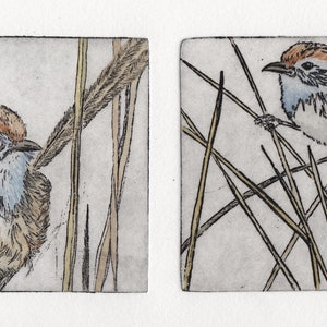 (CreativeWork) Emu-wren twin plate (Etching, Unique State) by Lydie Paton. mixed-media. Shop online at Bluethumb.