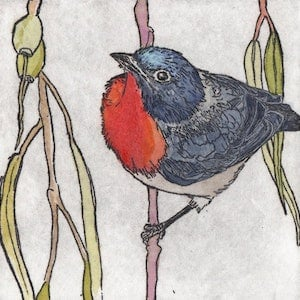 (CreativeWork) Mistletoe Bird (Etching) by Lydie Paton. mixed-media. Shop online at Bluethumb.