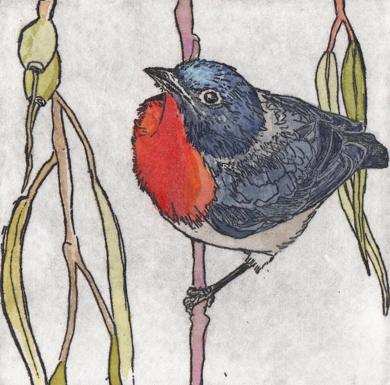 (CreativeWork) Mistletoe Bird (Etching) by Lydie Paton. Mixed Media. Shop online at Bluethumb.