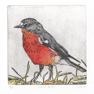 (CreativeWork) Flame Robin (Etching) by Lydie Paton. mixed-media. Shop online at Bluethumb.