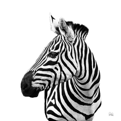 (CreativeWork) PJ's 100 Zebra by Peter Henning. photograph. Shop online at Bluethumb.