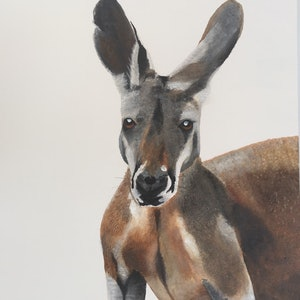 (CreativeWork) Western Red Kangaroo by Johanna Larkin. arcylic-painting. Shop online at Bluethumb.