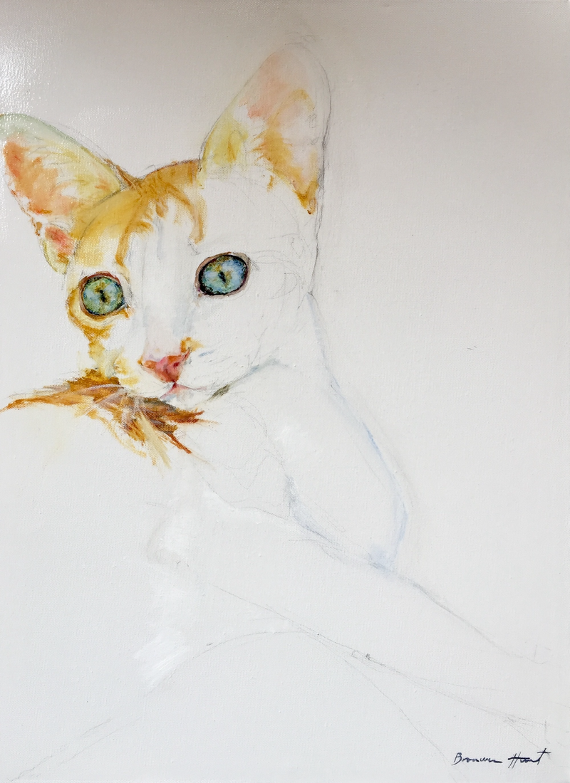 (CreativeWork) Kitten by Bronwen Hunt. oil-painting. Shop online at Bluethumb.