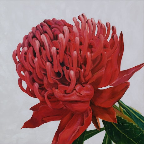 (CreativeWork) Waratah by Naomi Veitch. Acrylic Paint. Shop online at Bluethumb.