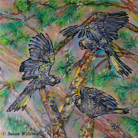 (CreativeWork) Yellow- tailed Black Cockatoos by Susan Willemse. Acrylic Paint. Shop online at Bluethumb.