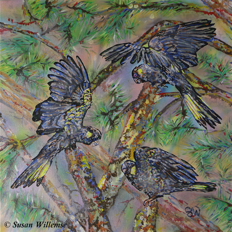 (CreativeWork) Yellow- tailed Black Cockatoos by Susan Willemse. arcylic-painting. Shop online at Bluethumb.