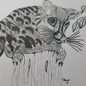 (CreativeWork) THE POSSUM.  by Sandra Messner. drawing. Shop online at Bluethumb.