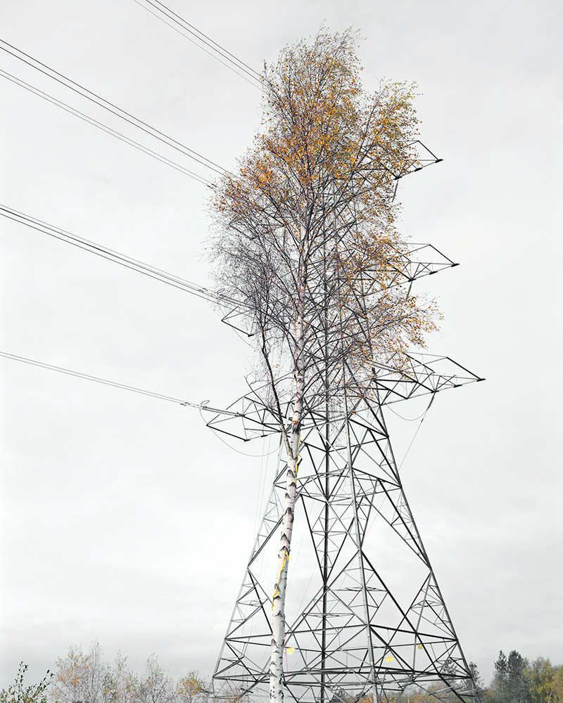 (CreativeWork) Birch & Steel / RA Edition, 2008 by Robin Friend. photograph. Shop online at Bluethumb.