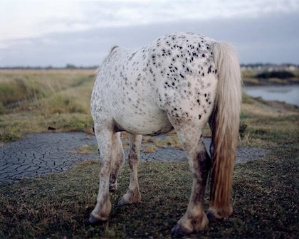 (CreativeWork) Horse, New Forest, Bastard Countryside, 2009 by Robin Friend. photograph. Shop online at Bluethumb.