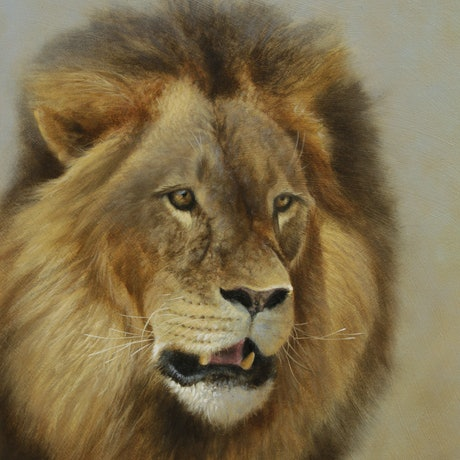 (CreativeWork) Lion portrait by Brett Jarrett. Oil Paint. Shop online at Bluethumb.