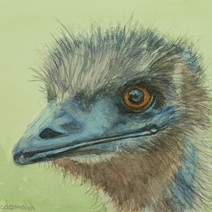 (CreativeWork) Emu by Peter Macdonald. watercolour. Shop online at Bluethumb.