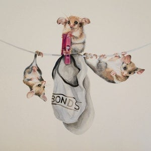 (CreativeWork) Pygmy Possums On The Line by Carol Croad. watercolour. Shop online at Bluethumb.
