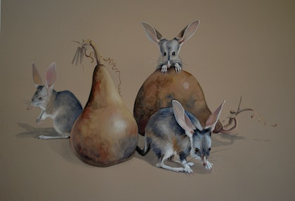 (CreativeWork) Bilbies In My Gourdes by Carol Croad. watercolour. Shop online at Bluethumb.