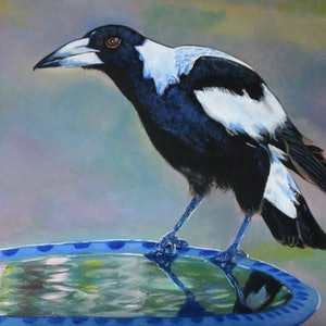 (CreativeWork) Magpie at the Bird Bath by Julie Hollis. acrylic-painting. Shop online at Bluethumb.