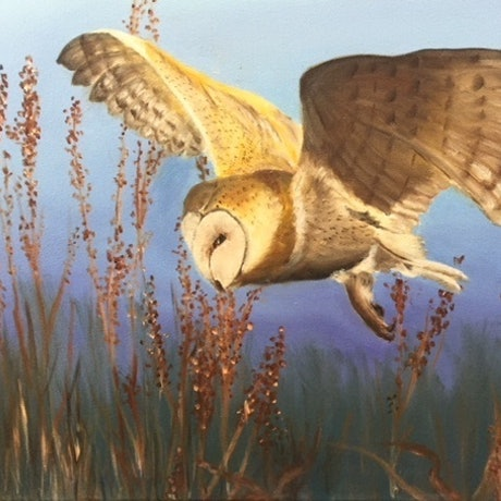 (CreativeWork) Barn Owl In Flight by Deidre Ogilvie. Oil Paint. Shop online at Bluethumb.