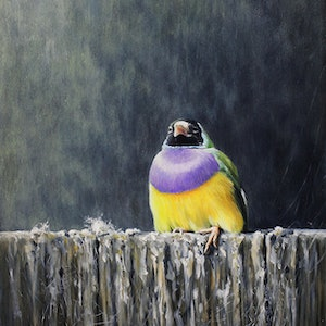 (CreativeWork) Favorite perch by William Ritchie. oil-painting. Shop online at Bluethumb.