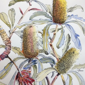 (CreativeWork) Banksia Impressions I Ed. 4 of 20 by Giulianna Del Popolo. print. Shop online at Bluethumb.