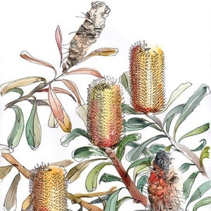 (CreativeWork) Banksia Impressions II Ed. 2 of 20 by Giulianna Del Popolo. print. Shop online at Bluethumb.