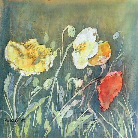 (CreativeWork) Poppies  by Carole Osmotherly. Other Media. Shop online at Bluethumb.