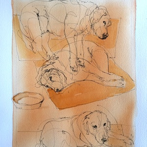 (CreativeWork) dog study 3 dogs one bowl by Rod BAX. drawing. Shop online at Bluethumb.