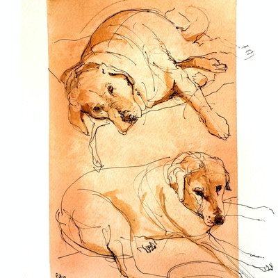 (CreativeWork) 2dogs 1 bowl study ii by Rod BAX. Drawings. Shop online at Bluethumb.