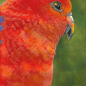 (CreativeWork) King Parrot by Vikki Jackson. mixed-media. Shop online at Bluethumb.