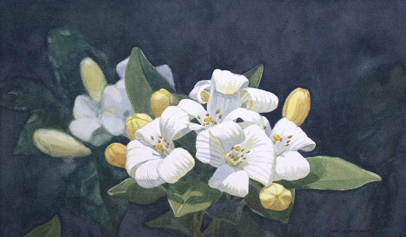 (CreativeWork) PURITY by JAN LAWNIKANIS. watercolour. Shop online at Bluethumb.