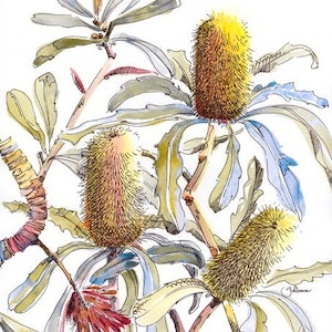 (CreativeWork) Banksia Impressions I Ed. 2 of 20 by Giulianna Del Popolo. print. Shop online at Bluethumb.