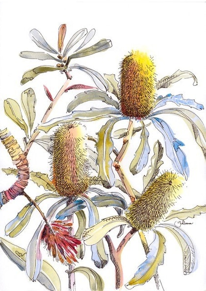 (CreativeWork) Banksia Impressions I Ed. 3 of 20 by Giulianna Del Popolo. print. Shop online at Bluethumb.