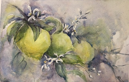 (CreativeWork) Summer Lemons by Carol Pease. watercolour. Shop online at Bluethumb.
