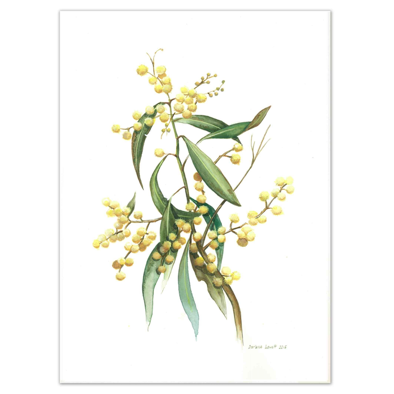 (CreativeWork) Australian Wattle Watercolour painting - Limited edition print Ed. 50 of 100 by Darlene Lavett. print. Shop online at Bluethumb.