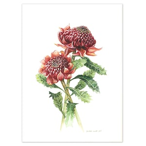 (CreativeWork) Australian Waratah Watercolour painting - Limited edition print Ed. 50 of 100 by Darlene Lavett. print. Shop online at Bluethumb.