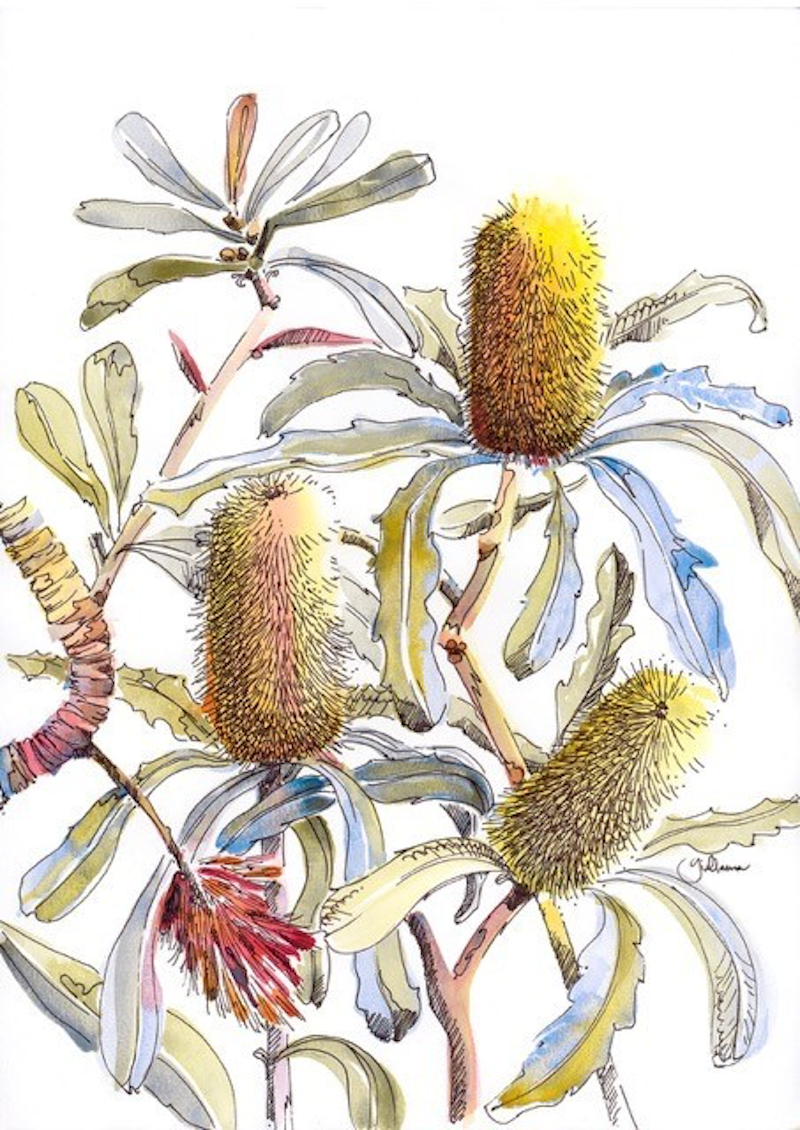(CreativeWork) Banksia Impressions I Ed. 5 of 20 by Giulianna Del Popolo. print. Shop online at Bluethumb.