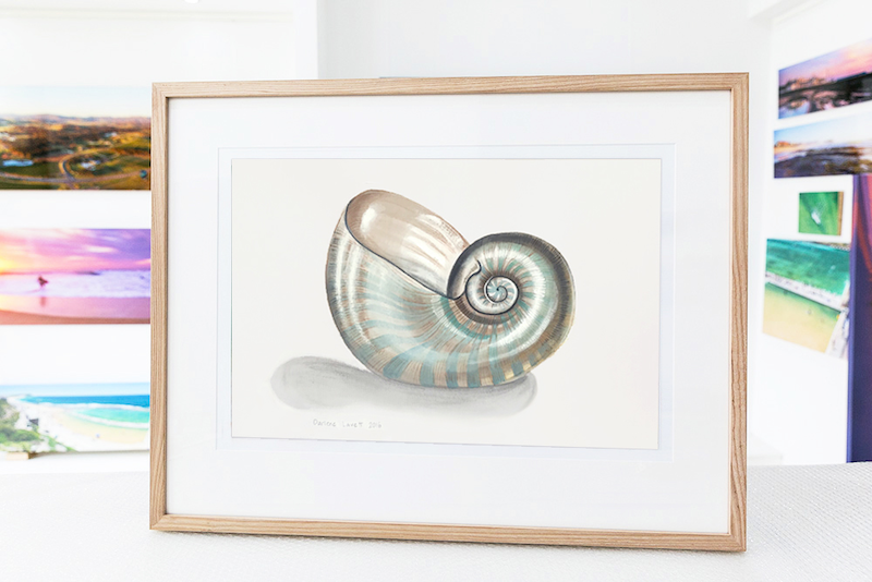 (CreativeWork) Nautilus shell by Darlene Lavett. watercolour. Shop online at Bluethumb.