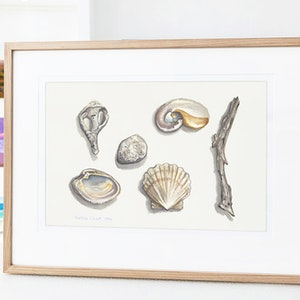 (CreativeWork) Two paintings: Moreton Bay Sea Shells and Nautilus Shell by Darlene Lavett. watercolour. Shop online at Bluethumb.