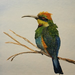 (CreativeWork) Rainbow Bee Eater by Loi Magill. arcylic-painting. Shop online at Bluethumb.