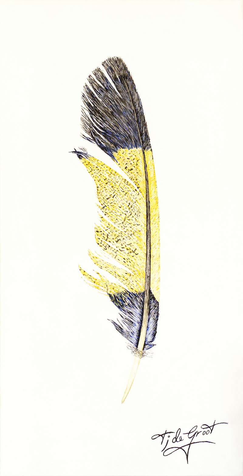 (CreativeWork)  Yellow Tailed Black Cockatoo Feather by Tim de Groot. arcylic-painting. Shop online at Bluethumb.