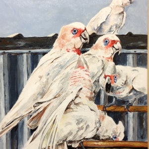 (CreativeWork) Corella Dispute by Lurlene Murray. arcylic-painting. Shop online at Bluethumb.