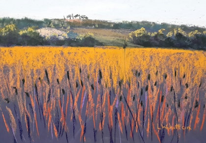 (CreativeWork) Fields of Gold . Tuscan landscape. by Lindy Whitton. drawing. Shop online at Bluethumb.