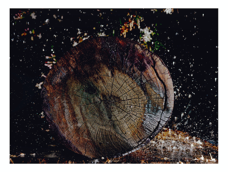 (CreativeWork) Woodchip Series - 2 by Alex Weltlinger. photograph. Shop online at Bluethumb.