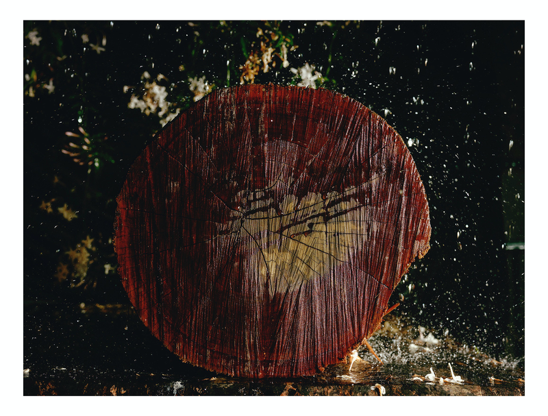 (CreativeWork) Woodchip Series - 3 by Alex Weltlinger. photograph. Shop online at Bluethumb.