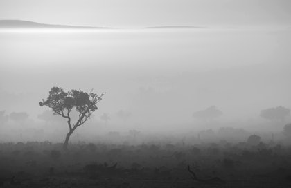 (CreativeWork) Purdy Fog - Bullock Bush by Stefanie Roeske. photograph. Shop online at Bluethumb.