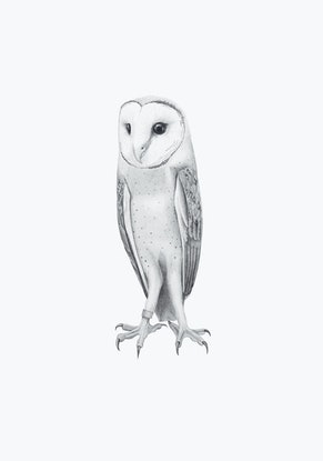 (CreativeWork) Barn Owl – A3 illustration by Clare McCartney. #<Filter:0x00007f0bd09a4510>. Shop online at Bluethumb.