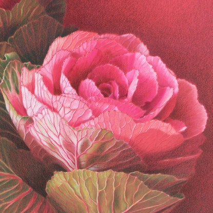 (CreativeWork) ORNAMENTAL KALE by JAN LAWNIKANIS. Drawings. Shop online at Bluethumb.