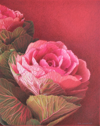 (CreativeWork) ORNAMENTAL KALE by JAN LAWNIKANIS. drawing. Shop online at Bluethumb.