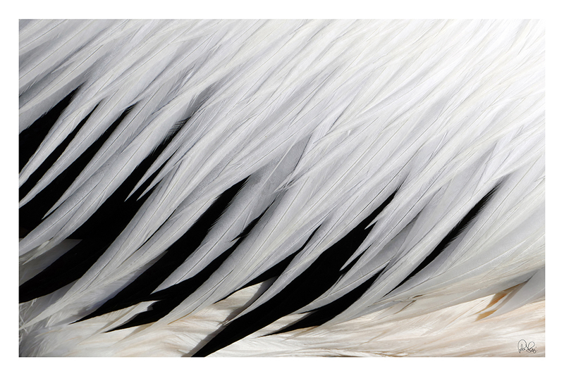 (CreativeWork) P 121 Lazy Pelican, 818 by Peter Henning. photograph. Shop online at Bluethumb.