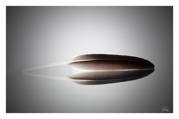 (CreativeWork) P 025 Feather Ed. 4 of 70 by Peter Henning. Photograph. Shop online at Bluethumb.