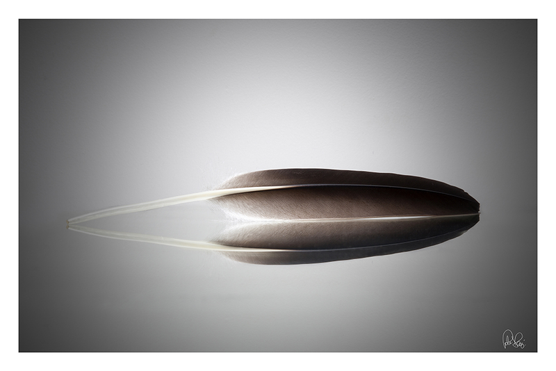 (CreativeWork) P 025 Feather by Peter Henning. photograph. Shop online at Bluethumb.